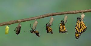 تغییر و تحول سازمان