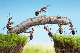 منابع انسانی شرکتیار، مدیریت منابع انسانی، نقشهای کلیدی منابع انسانی، عامل تغییر، شریک استراتژیک کسب و کار
